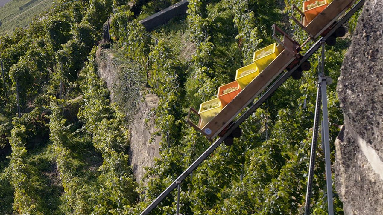 Suisse : Lavaux, les vignes forteresses