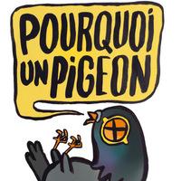 Pourquoi un Pigeon ?